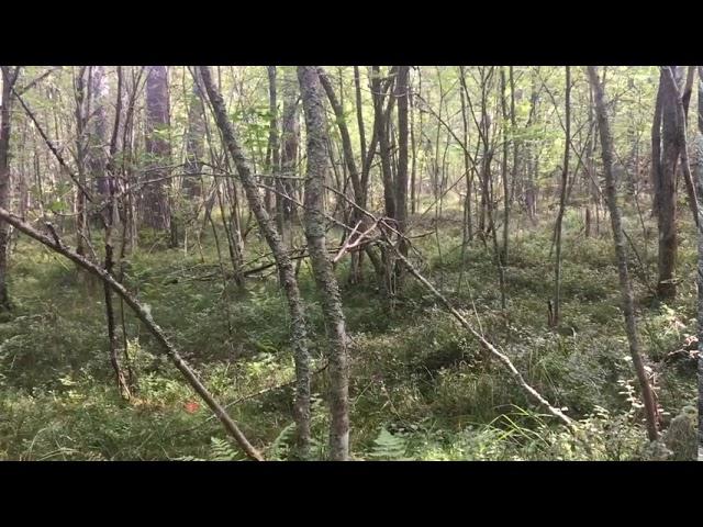 Filosofía en el bosque 34. La música Parte 1.