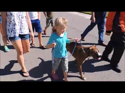 Safecalm Dog Training Collar