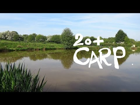 POLE FISHING How I Caught 20+ CARP In The Margins VLOG#4