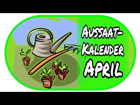 🌻Aussaatkalender April - Vorzucht Zu Hause 🌻// Garten // Anzucht //Aussaat // Gewächshaus