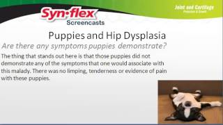 Glucosamine And Puppies With Hip Dysplasia