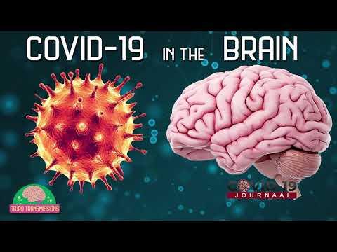 Hoe worden de hersenen aangetast tijdens een COVID-19 besmetting ? Neuroloog Dr. Yang legt het uit.