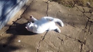 """""""Cats Love Olives Compilation"""" 