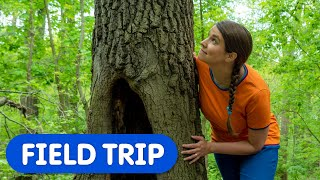 Let's Take A Walk In The Woods | Caitie's Classroom