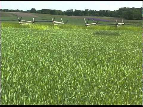 The Miller Cornfield - Antietam National Battlefield