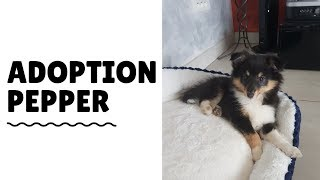 Adoption Pepper Berger Des Shetland Youtube