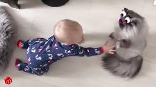 Compilation of funny videos dogs, cats and children