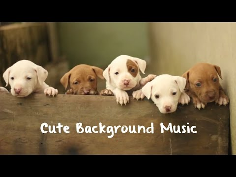 Cute Background Music for Children Videos - Funny Kids
