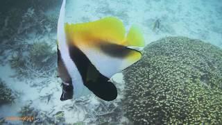 イパオビーチの人懐っこい魚.