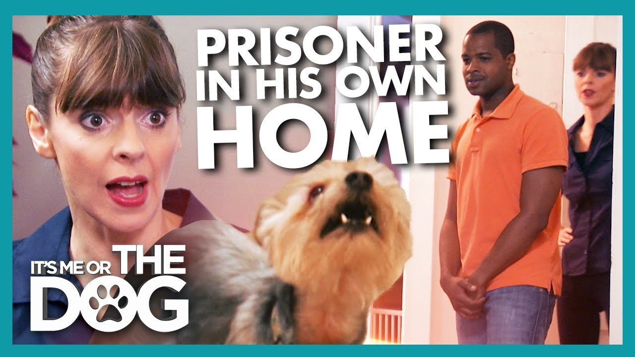 Man Becomes Prisoner in his Own Home Because of Aggressive Dog |  It's Me or The Dog