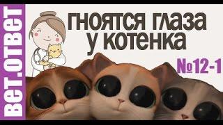Гноятся глаза котенка, Как поменять корм, Таблетки от глистов. ВетОтвет №12-1