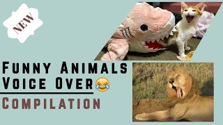 Funny Animals Voice Over by HUMANS!