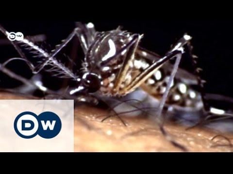 New malaria vaccine | Tomorrow Today