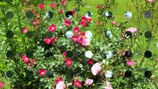 A virágok dala