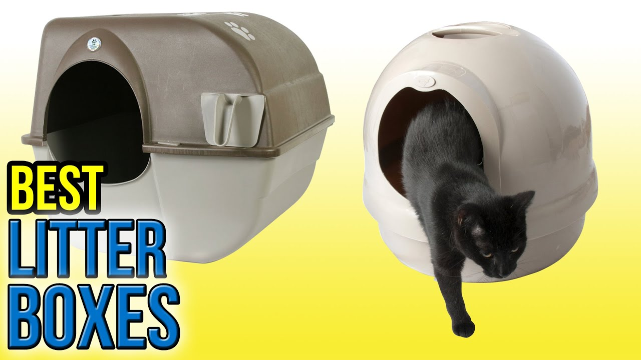 10 Best Litter Boxes 2016 Funnycattv