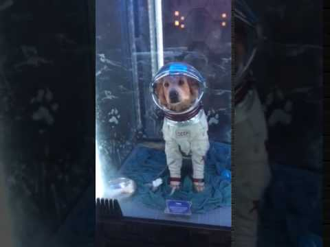 Cosmo the dog appears on The Marvel ride of Guardians of ... Cosmo The Dog Guardians Of The Galaxy