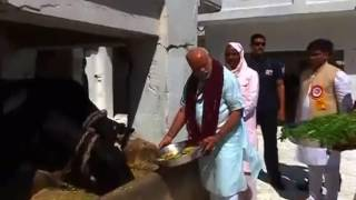 Varanasi : PM Modi feeds cows at Gaushala in Gadwaghat Ashram ॥ Sandesh News