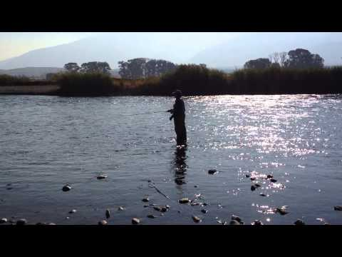 Trout Fishing in Yellowstone River