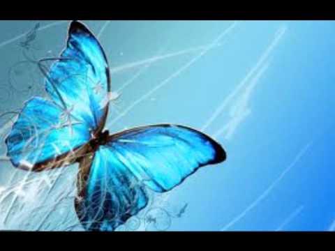 Butterflies (by Amba Shepherd)