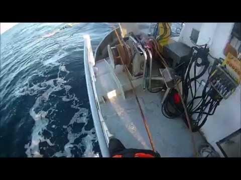 Seine Fishing For Cod In Vesterålen Of Norway..