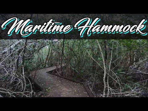 Maritime Hammock Sanctuary   Florida Hiking