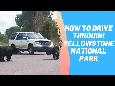 How to Drive Through Yellowstone National Park