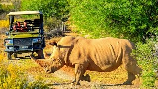 Südafrika »Vom Kap bis zum Krüger«