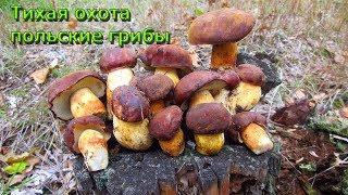 За польскими грибами. Тихая охота