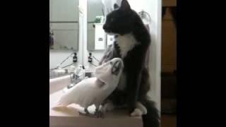 こんな関係もいいんじゃない?ベストフレンズな猫とオウムのイチャコラ風景はいかが?