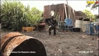 Шарик Шоу   Боевая Обезьяна выпуск 13   YouTube
