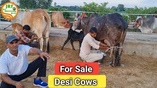 👍For Sale : 38000Rs👍 Desi Cows available Handa Dairy Farm (88138 54754)👍