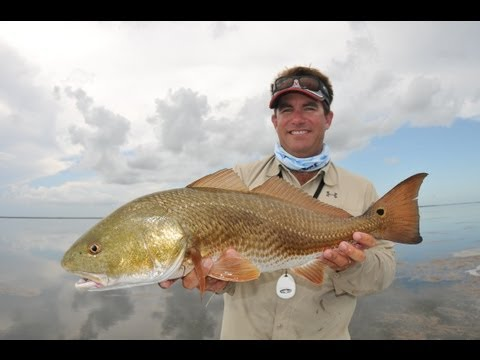 "Saltwater Experience: ""Shark, Snook and Redfish in the Bushes"" Season 7 