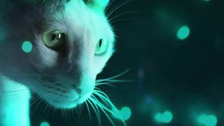 Official Meow Mix Song - Cats at a Rave! Video