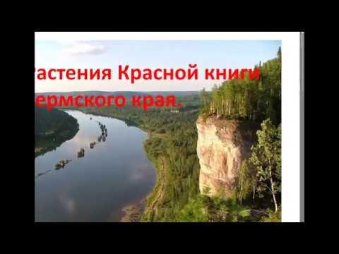 Растения Красной книги Пермского края.