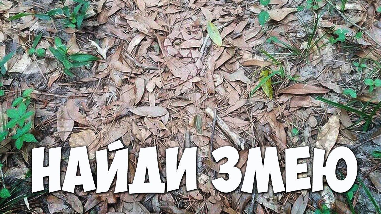 ТЕСТ. Найди животное на фото ???? БУДЬ В КУРСЕ TV