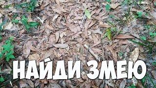 ТЕСТ. Найди животное на фото 🐛 БУДЬ В КУРСЕ TV
