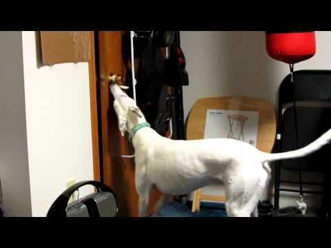 Service Dog Bloopers! Opening And Closing The Door