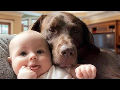 Labrador Dog and Baby Playing Compilation 2018