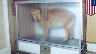 Любимая собака погибла по вине грумера