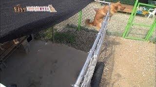 SBS [동물농장] - 철창을 사다리처럼 타는 개