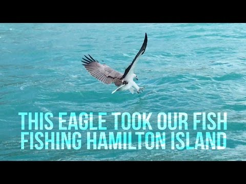 An eagle took our fish - Fishing Hamilton island