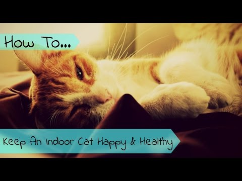 How To Keep An Indoor Cat Happy And Healthy