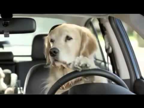 Guida da cani... Subaru - YouTube