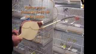 Remedios caseros sobre los ácaros en los nuestros pájaros