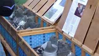 Racing Pigeon Market Lier, Belgium 2014