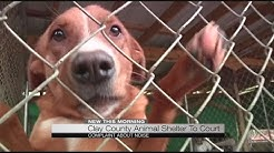 Clay County Animal Shelter to court