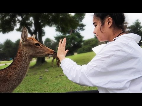 PATTING DEER AT NARA PARK
