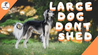 Top 10 Large Dog Breeds That Don't Shed