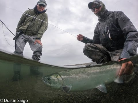 Fly Fishing For Chrome Salmon At Reel Action Alaska Lodge