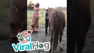 horses-are-distrustful-of-dino-viralhog